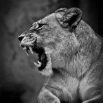 Wenn Kunden nerven: Drei Tipps, bevor Sie explodieren